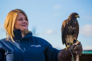 Pest Controller with a bird of prey